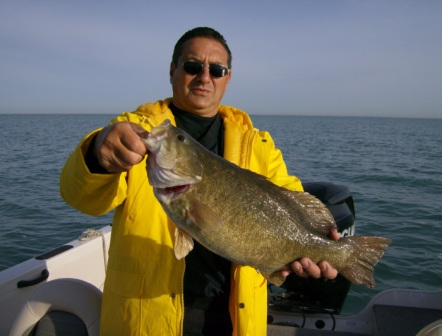 A true 7lb plus Lake Erie smallmouth bass
